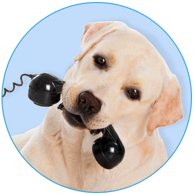 heres-the-phone-pup
