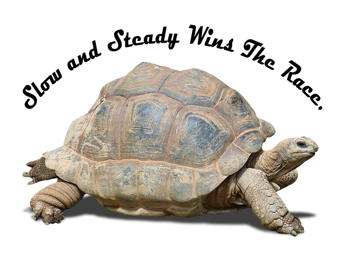 direct marketing covid19 coronavirus image tortise turtle